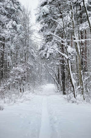 Snow covered woodland scene with copy space photo