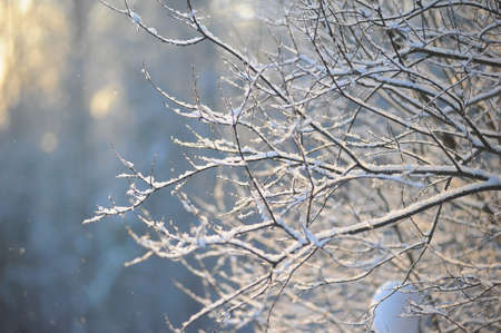Close up view of winter nature photo
