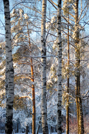 Winter scene. photo