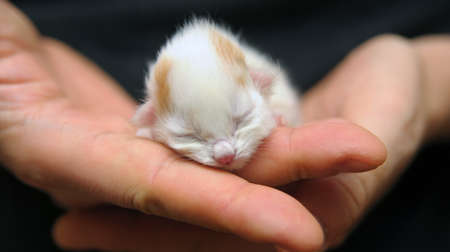 A newborn kitten ( 6 hours from birth ) held in a hand photo