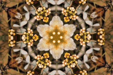 brown circular pattern of flowers photo