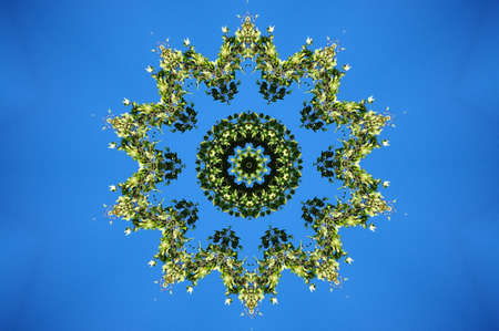 green ornament on a blue background Stock Photo - 8699897