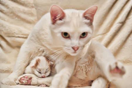 neonato: Gato y gatito.