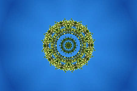 luxuriance: green flora ornament on a blue background Stock Photo
