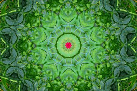amoeba: modello circolare verde Archivio Fotografico