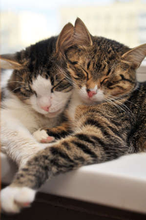 Two cats together Stock Photo - 9216072