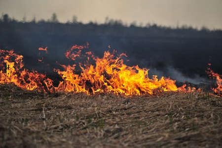 burning bush: burning grass