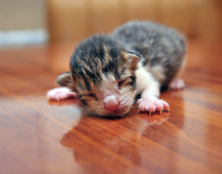blind newborn kitten photo