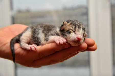 blind child: Kitten on a hand