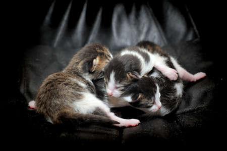 Newborn kittens photo