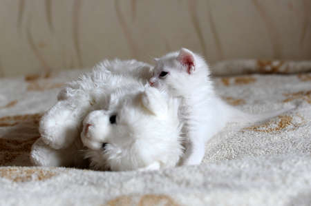 white kitten and toy