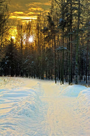 winter forest: Sunset in Winter Park