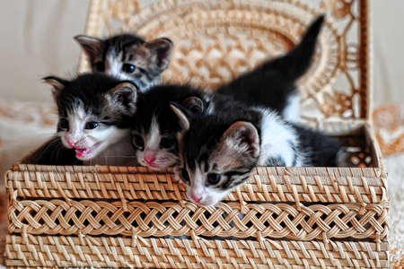 Kittens in a basket Stock Photo - 9416202