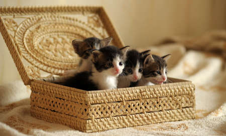 ear checked: Kittens in a basket