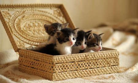 small basket: Kittens in a basket