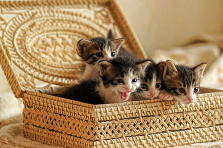 Kittens in a basket Stock Photo - 10568770
