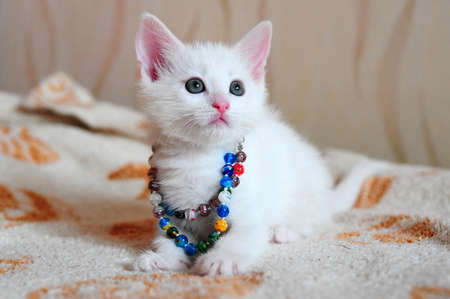 hairy adorable: white kitten