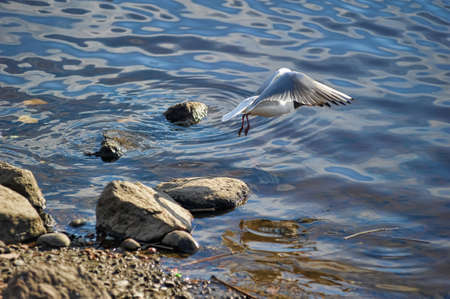 swoop: cheick flying over water Stock Photo