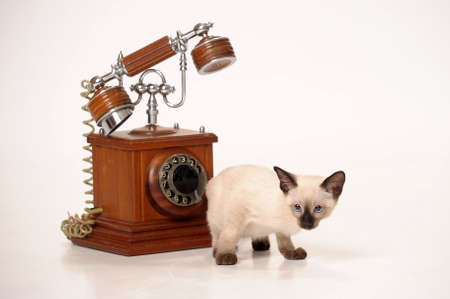 Siamese kitten and retro phone