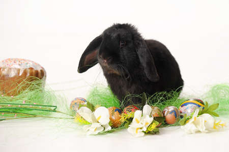 black easter bunny photo