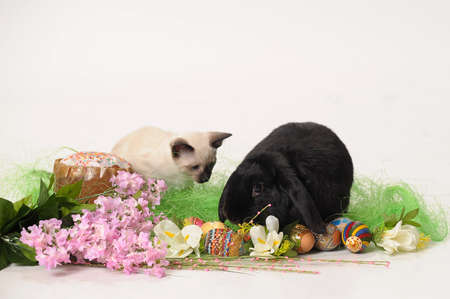 siamese cat and a rabbit Stock Photo - 9669599
