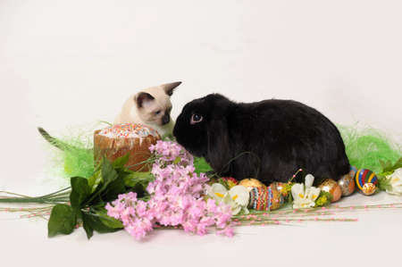siamese cat and a rabbit photo