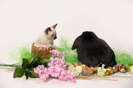 siamese cat and a rabbit Stock Photo - 9669602