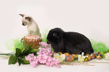 siamese cat and a rabbit Stock Photo - 9669603