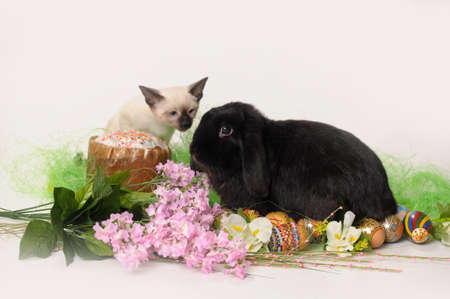 siamese cat and a rabbit Stock Photo - 9669596