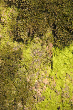 moss: surface of the stone covered with moss