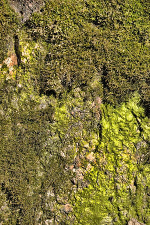 dampen: surface of the stone covered with moss