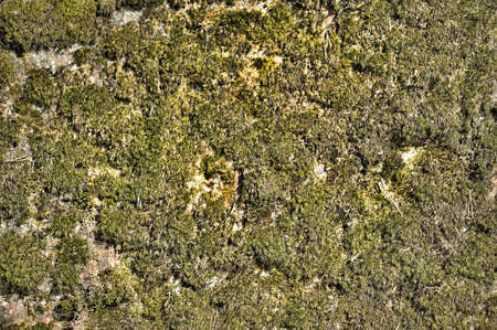 bedrock: surface of the stone covered with moss