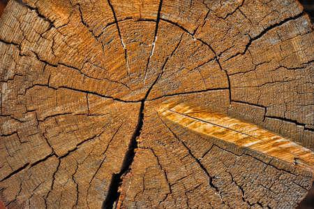 Cut log wood grain photo
