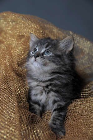lovely fluffy kitten Stock Photo
