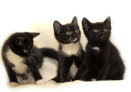 three kittens photo