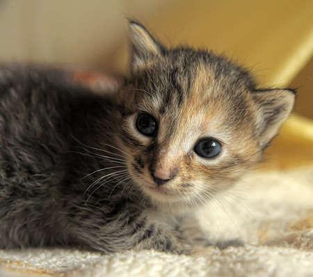 little kitty Stock Photo - 10448480