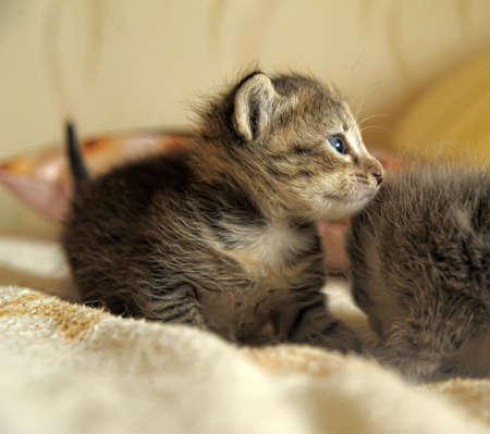 little kitty Stock Photo - 10448468