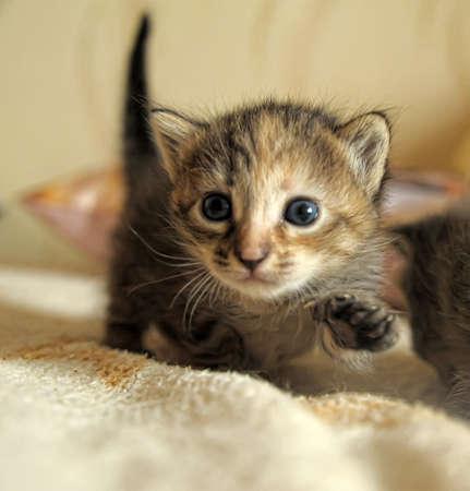 little kitty Stock Photo - 10448463