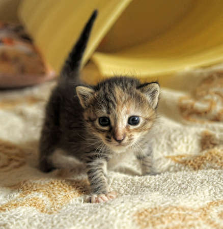 Kätzchen Standard-Bild