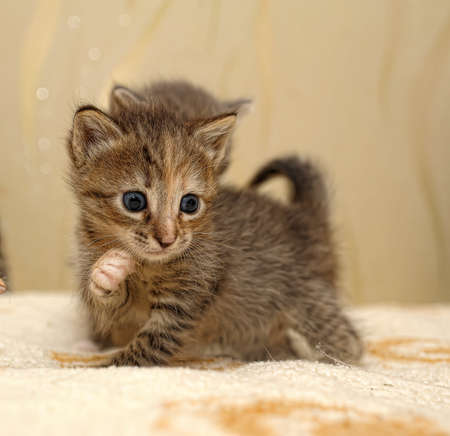little kitty Stock Photo