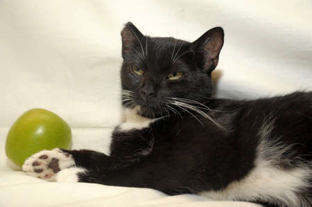 cat and a green apple photo