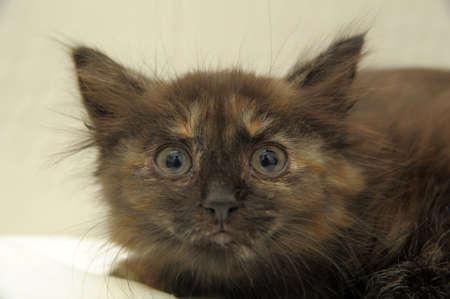 scared kitty Stock Photo - 10847942