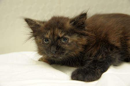 scared kitty Stock Photo - 10847764