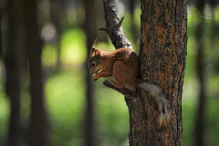Small squirrel on a tree Stock Photo