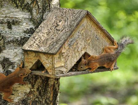 Small squirrel  photo
