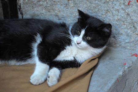 black and white cat Stock Photo - 10079677