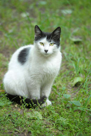 street cat Stock Photo - 10079679