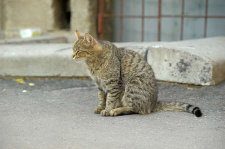 street cat Stock Photo - 10568342