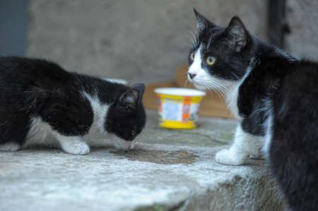 street cat Stock Photo - 10079659
