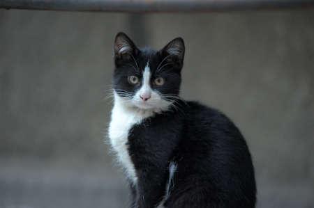 black and white cat Stock Photo - 10079663
